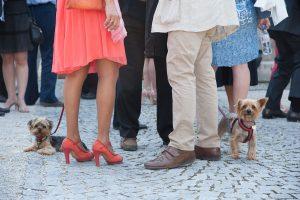 Petits animaux de compagnie invités au mariage au Bourget du lac (Prieuré)
